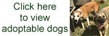 adoptable_dogs_button