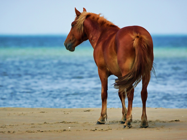 corolla_wild-horse
