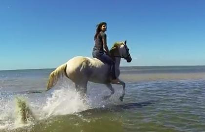 horsebeach