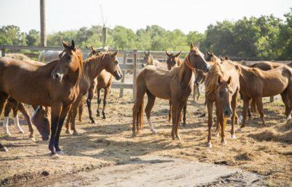 Habitat for Horses