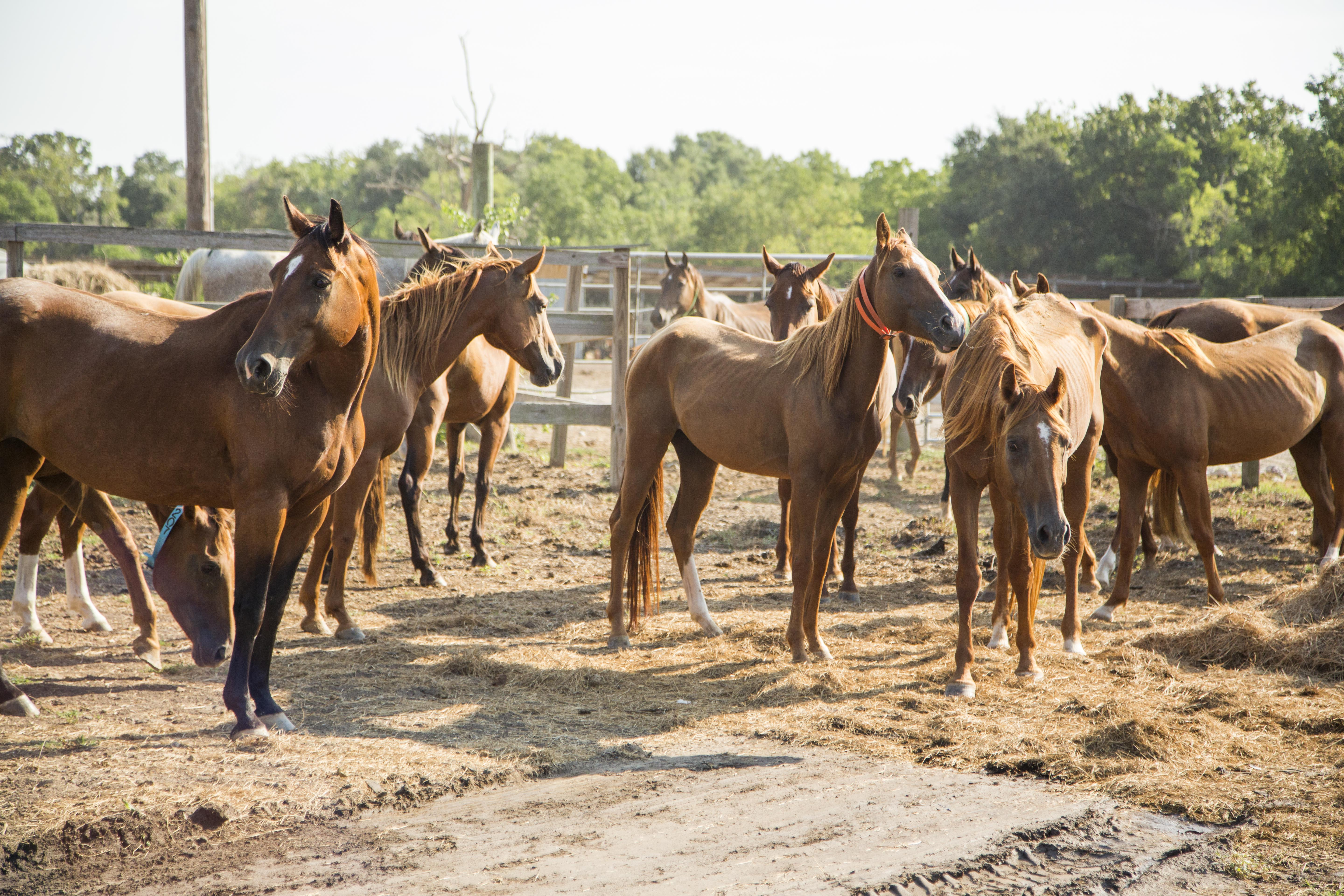 See updates for conroe calico farm horses in habitat for for Horse farm