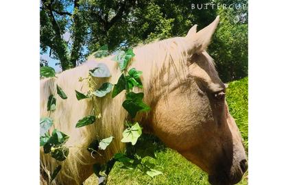 buttercup_FP_900