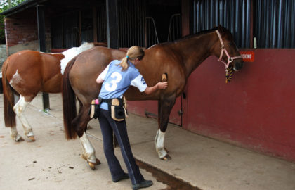 girl-grooming-horse-at-stable-1