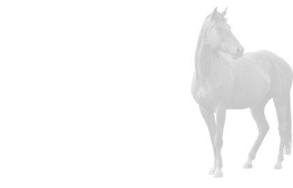horse-image