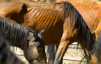starving_horses
