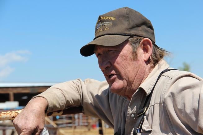 Tom Davis is a bidder of horses at the facility in Canon City. Photo by Dave Phillips
