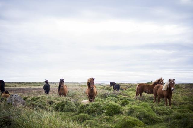 nature-farm-animals-horses