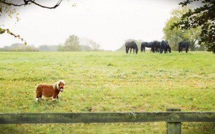 little-horse