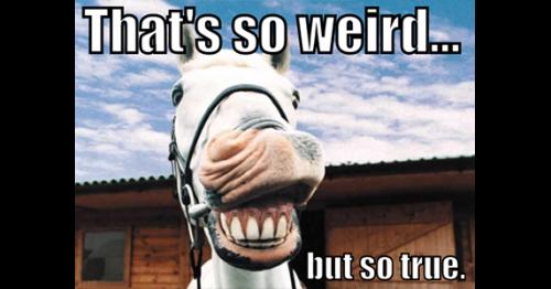 Weird But True Horse Facts: Anatomy - Habitat For Horses