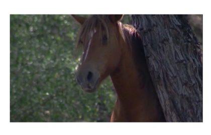 SALT RIVER HORSES FOR WEB_1449324954734_589234_ver1.0