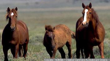 Wild+Horses16