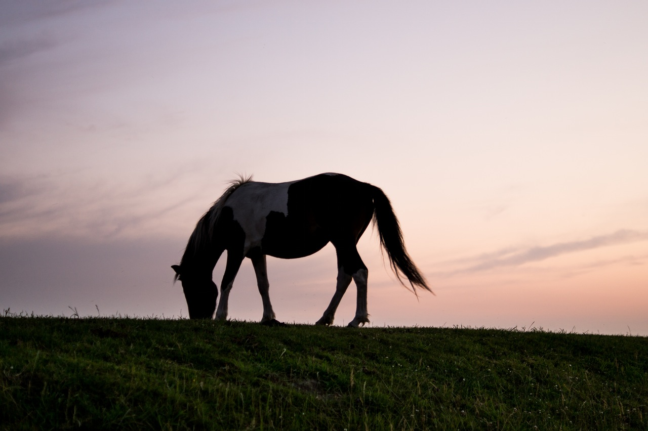 animal-silhouette-horizon-horse