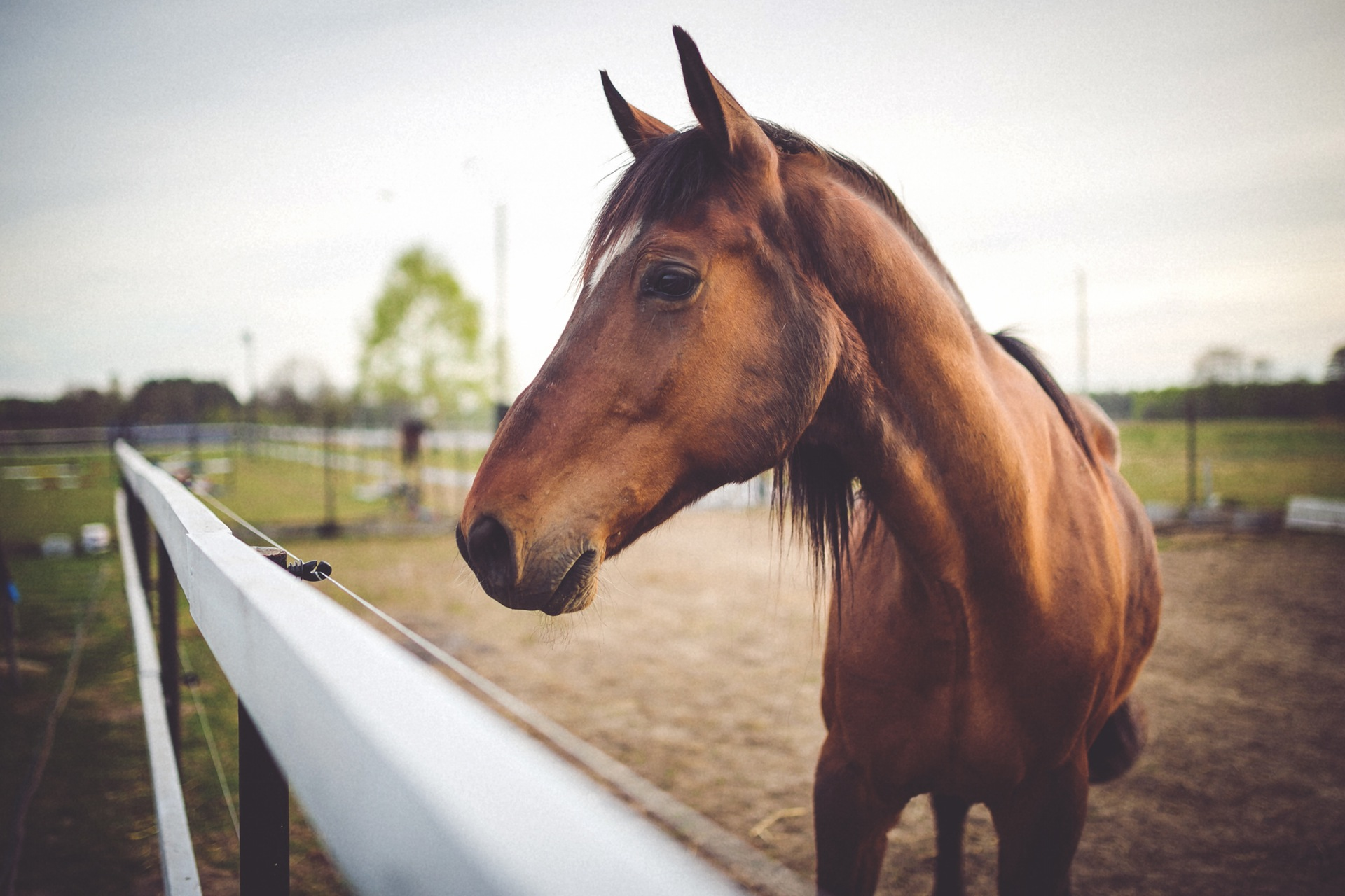 Support Us Habitat For Horses