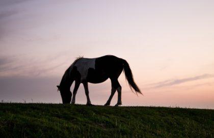 animal-silhouette-horizon-horse(1)