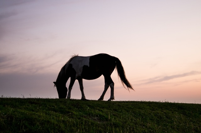 animal-silhouette-horizon-horse(1)