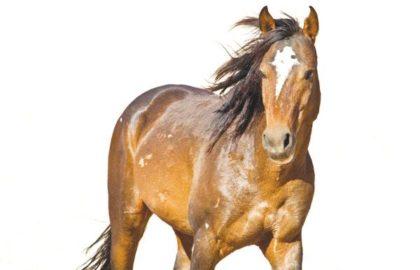 fnb-horses