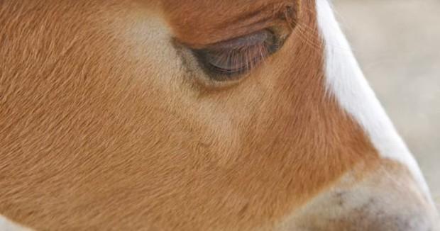 Foal-620x326