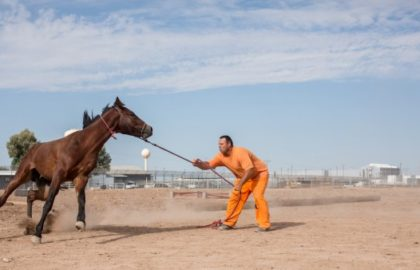 horse-thumb