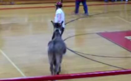 donkey post