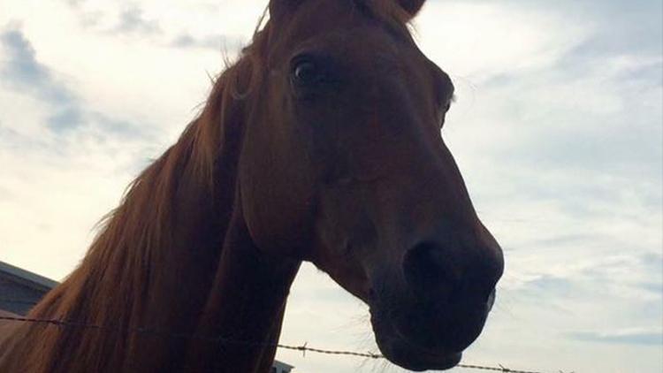 horsemurder