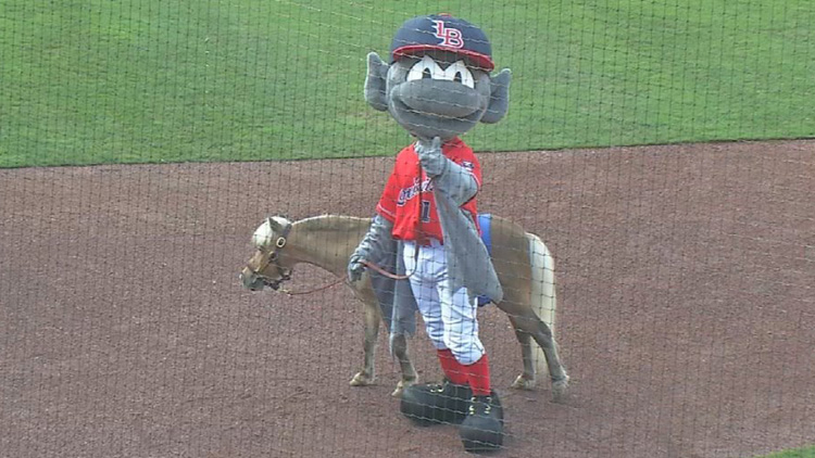 Winston The Mini Horse Throws First Pitch At Bats Game Habitat