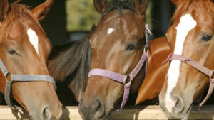 horse_weg_1024