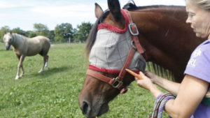 blind_horse