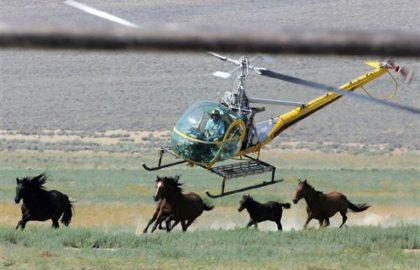 170525-wild-horses-cr-0723_3ee67df9e12dafdf7ed3ad9854449142.nbcnews-ux-600-480