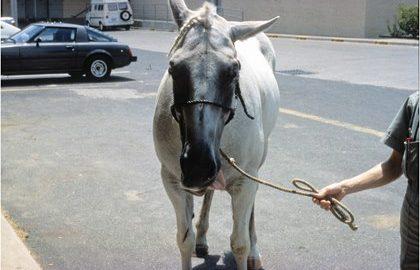 TH-LEGACY-IMAGE-ID-264-epm-horse
