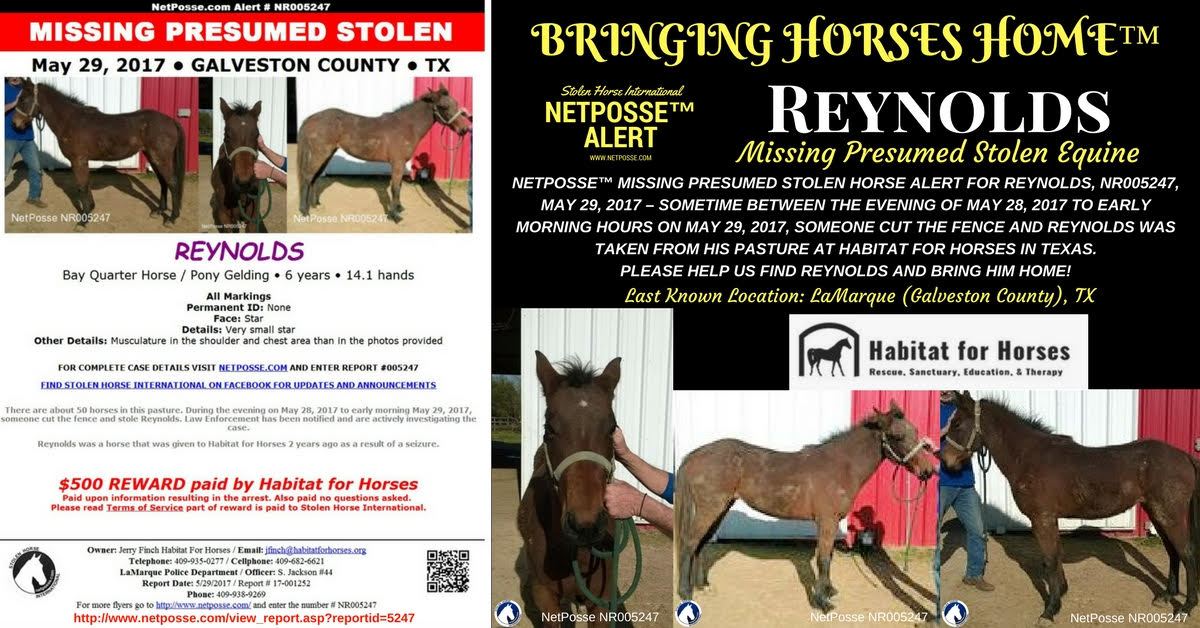 Reynolds is missing and presumed stolen from one of our pastures recently. We are offering $500 reward for the arrest or just to return the horse.
