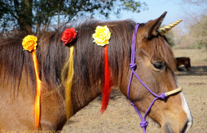 Layla-1-unicorn