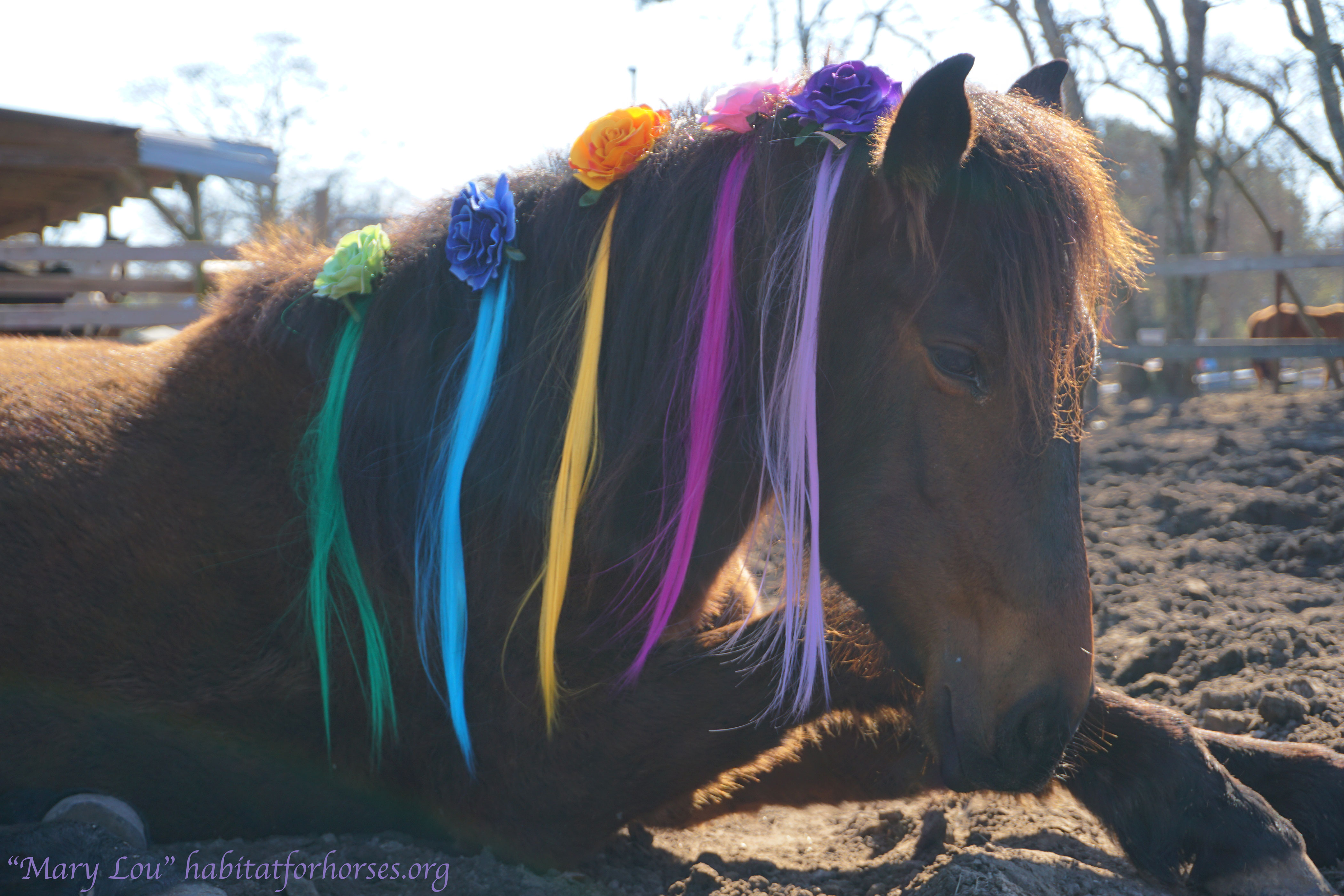 Mary-lou--unicorn-12
